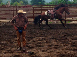 Jose doing roung pen workd with 3 year old stud